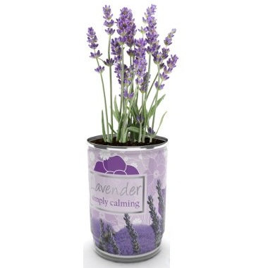 Grow Your Own Lavender Plant In A Can Just Add Water